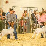 4-H students show off their goats at the fair. Photo by Dustin Cox.